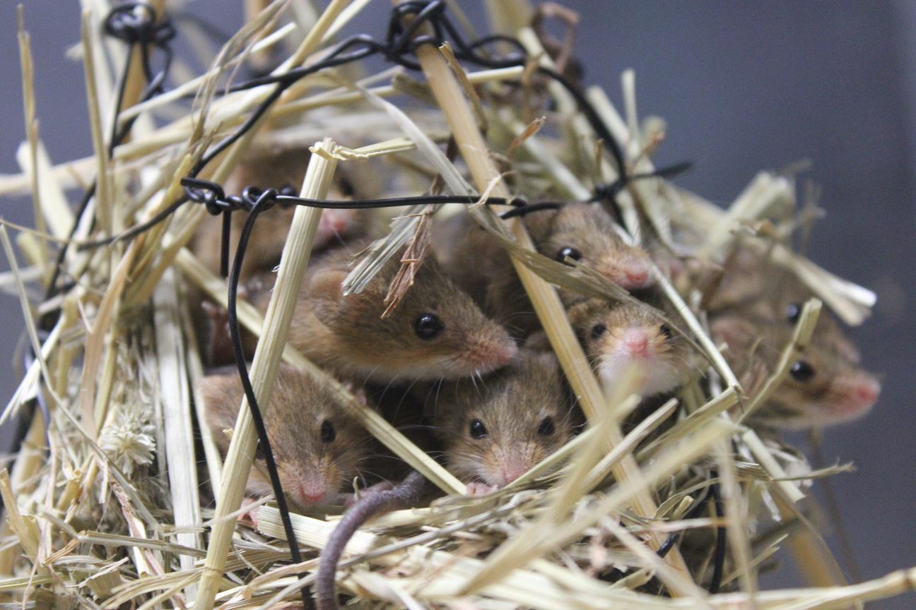 【動物】「醜い」げっ歯類やコウモリの研究、人気のなさに警鐘 オーストラリア [無断転載禁止]©2ch.net YouTube動画>4本 ->画像>52枚